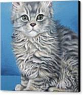 Velvet Kitten Canvas Print