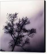 Velvet Mist Canvas Print by Tyler Lucas