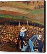 Vendemmia Nell'astigiano Canvas Print