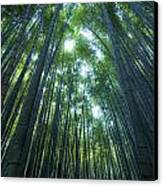 Vertical Bamboo Forest Canvas Print by Aaron Bedell