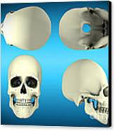View Of Human Skull From Different Canvas Print