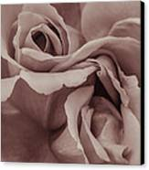 Vignette Rose. Canvas Print