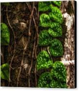 Vine Growing On Tree Canvas Print by Al Andersen