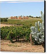 Vineyard And Winery Canvas Print