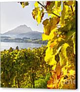 Vineyard At Lake Lucerne Canvas Print by George Oze