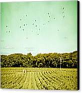 Vineyard Canvas Print by Colleen Kammerer