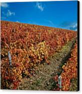 Vineyard In Negotin. Serbia Canvas Print