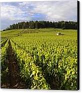 Vineyard Near Monthelie. Burgundy. France. Europe Canvas Print