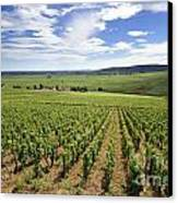 Vineyard Of Cotes De Beaune. Cote D'or. Burgundy. France. Europe Canvas Print
