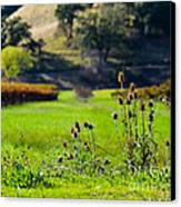 Vineyard Thistles Canvas Print by CML Brown
