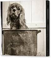 Vintage Puppy Bath Canvas Print by Edward Fielding