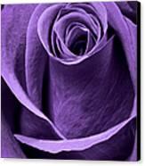 Violet Rose Canvas Print by Adam Romanowicz