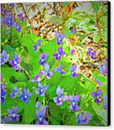 Violets Canvas Print by Debbie Sikes