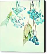 Virginia Creeper Berries Canvas Print by Theresa Tahara