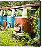 Vw Buses Canvas Print by Carolyn Marshall