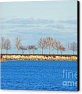 Waiting For Summer - Trees At The Edge Canvas Print by Mary Machare