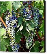 Waiting For Wine Canvas Print by Carol Groenen