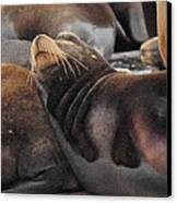 Wake Me When The Herring Arrive Canvas Print by Randy Hall