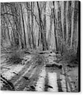 Walking  Amongst Shadows Canvas Print by Thomas  MacPherson Jr