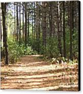 Walking Trail Canvas Print by Margaret McDermott