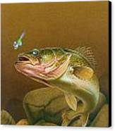 Walleye And Spinner Jig Canvas Print by Jon Q Wright