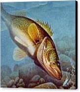 Walleye Ice Fishing Canvas Print by Jon Q Wright