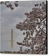 Washington Monument - Cherry Blossoms - Washington Dc - 011319 Canvas Print by DC Photographer