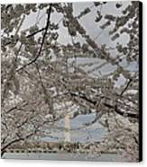 Washington Monument - Cherry Blossoms - Washington Dc - 011323 Canvas Print by DC Photographer