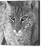 Watchful Eyes Black And White Canvas Print by Jennifer  King
