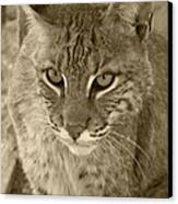 Watchful Eyes-sepia Canvas Print
