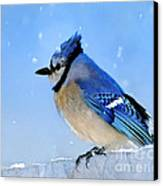 Watching The Snow Canvas Print by Betty LaRue