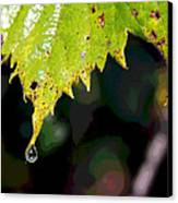 Water Droplet On Leaf Canvas Print by Greg Thiemeyer