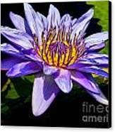 Water Flower Canvas Print by Nick Zelinsky