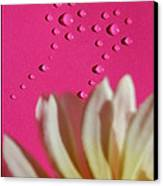 Water Flowers Canvas Print by Kip Krause
