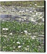 Water Lilies Canvas Print by Gordon  Grimwade