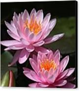 Water Lilies Love The Sun Canvas Print by Sabrina L Ryan