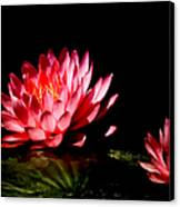 Water Lily 5 Canvas Print by Julie Palencia