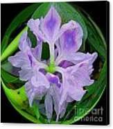 Water Lily Circle Canvas Print