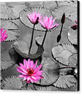 Water Lily Lotus Flower And Leaves Canvas Print