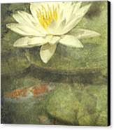 Water Lily Canvas Print by Scott Norris