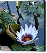 Water Lily Canvas Print by Sharon McLain