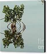 Water Pond  Canvas Print