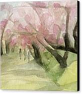 Watercolor Painting Of Cherry Blossom Trees In Central Park Nyc Canvas Print