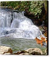 Waterfall Dogs Canvas Print by Bob Jackson