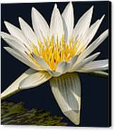 Waterlily And Pad Canvas Print by Susan Candelario