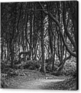 We Follow The Path Canvas Print by Jon Glaser
