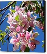 Weeping Cherry Tree Blossoms Canvas Print by Carol Groenen