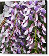 Weeping Wisteria - Spring Snow - Ice - Lavender - Flora Canvas Print