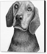 Weiner Dog Canvas Print