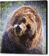 Wet Griz Canvas Print by Steve McKinzie